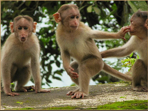 matheran-monkeys.jpg 3